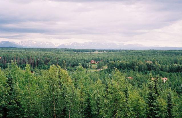 Alsaka Forest View